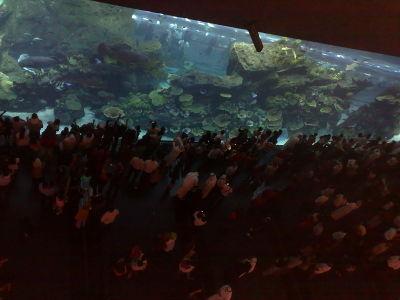 800px081106_dubai_mall__aquarium